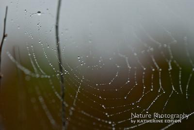 Dewy Spider Web